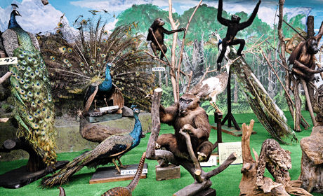 写真:つやま自然のふしぎ館